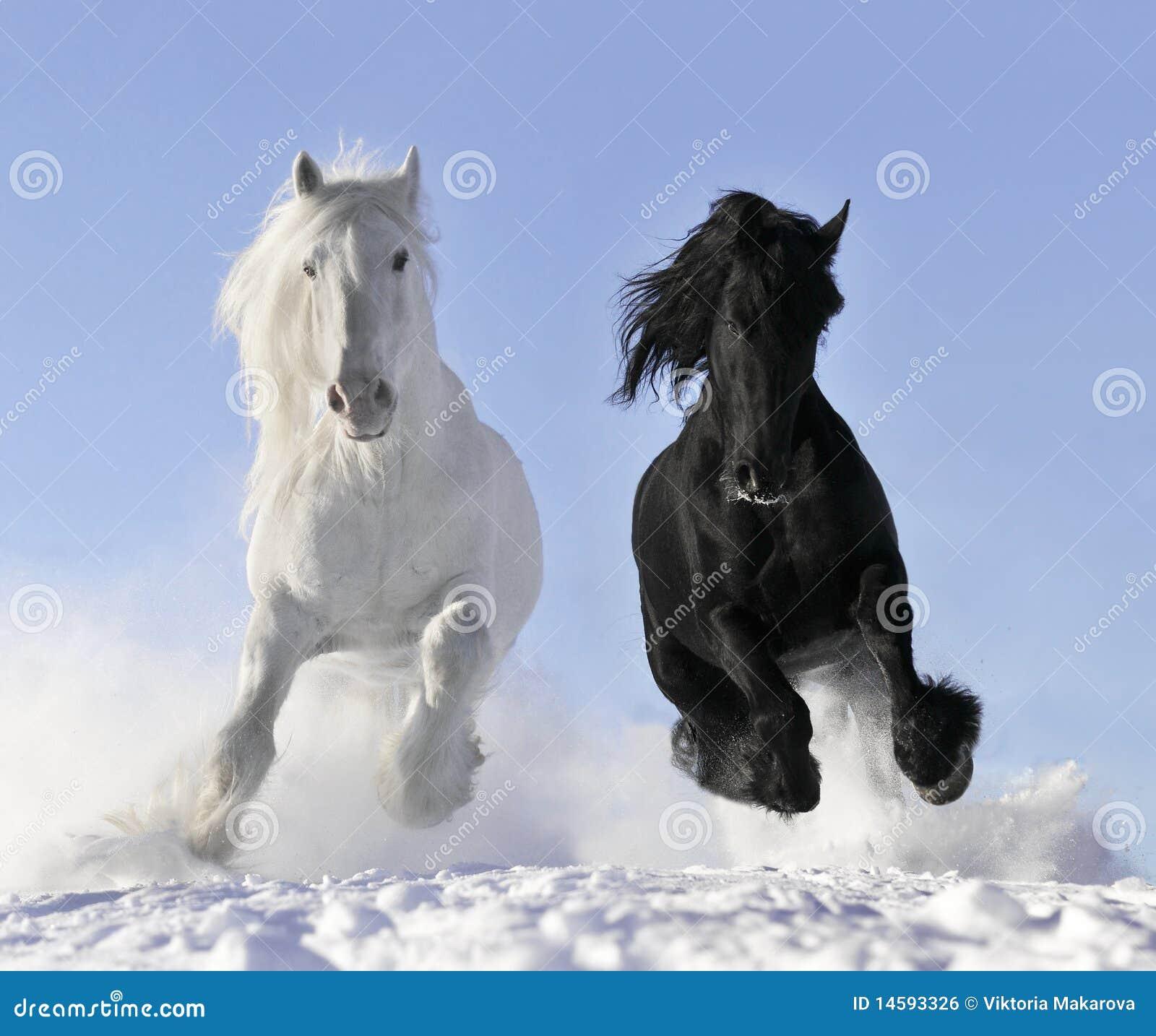 Wit en zwart paard