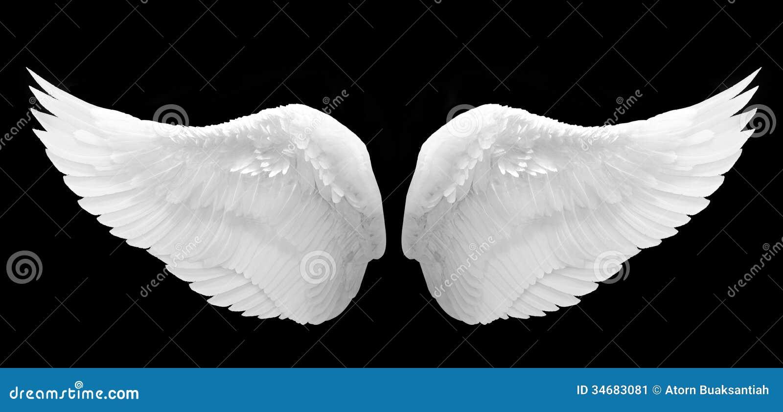 Wit geïsoleerd Angel Wing