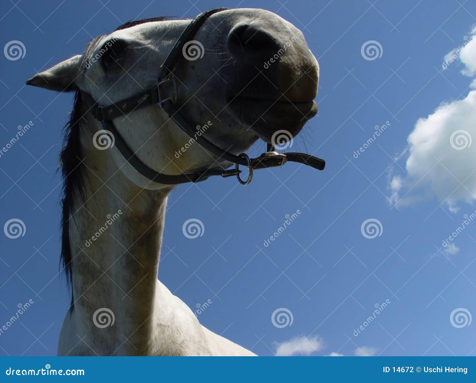 Wit paard 5