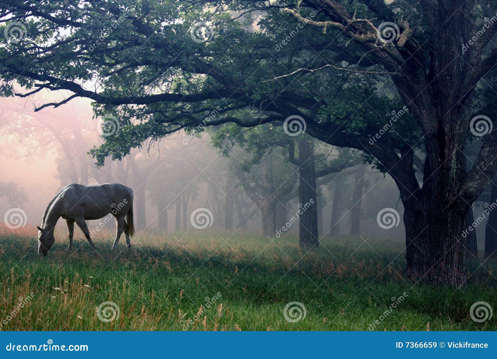 Wit Paard in de Mist