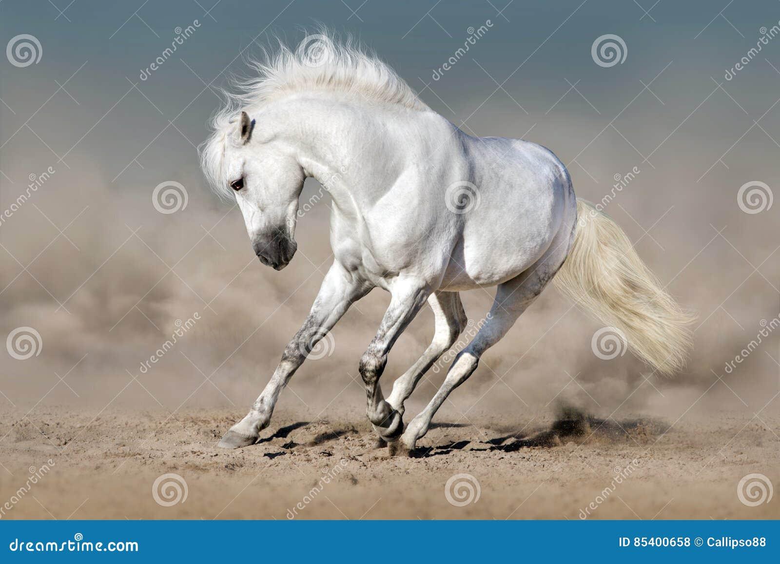 Wit paard in woestijn