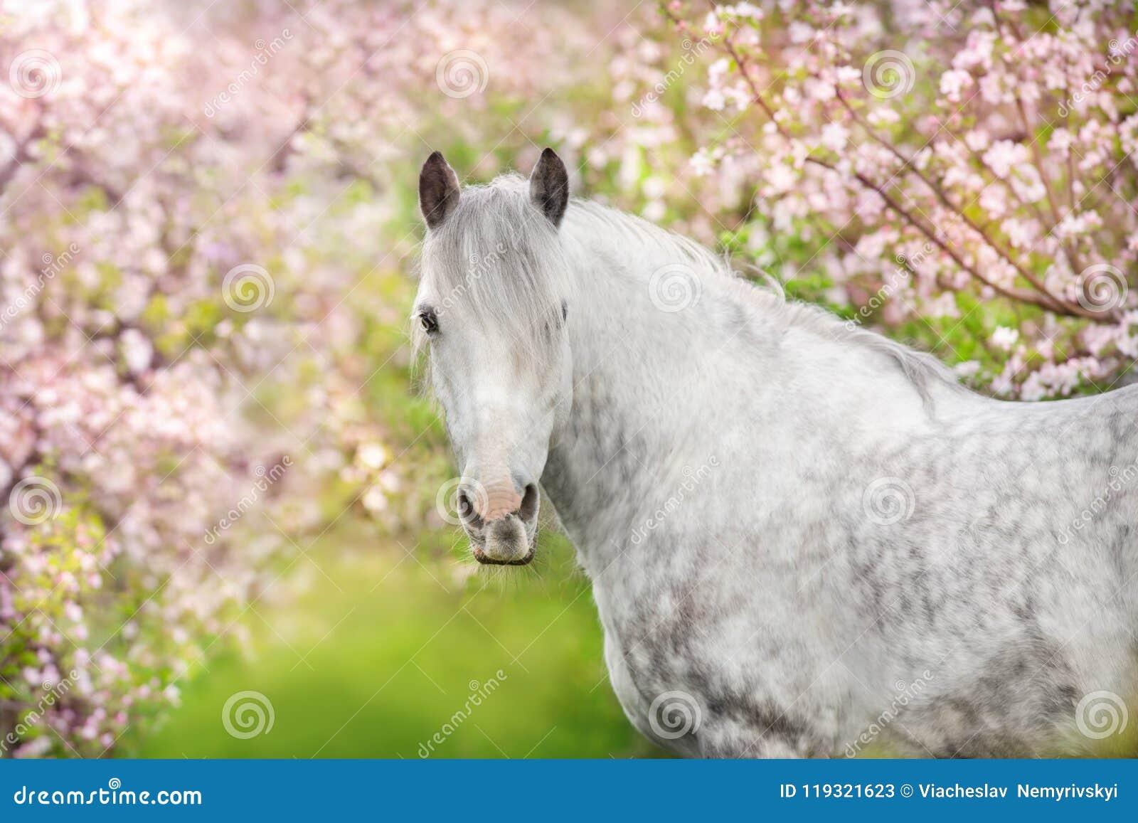 Wit paardportret in bloesem