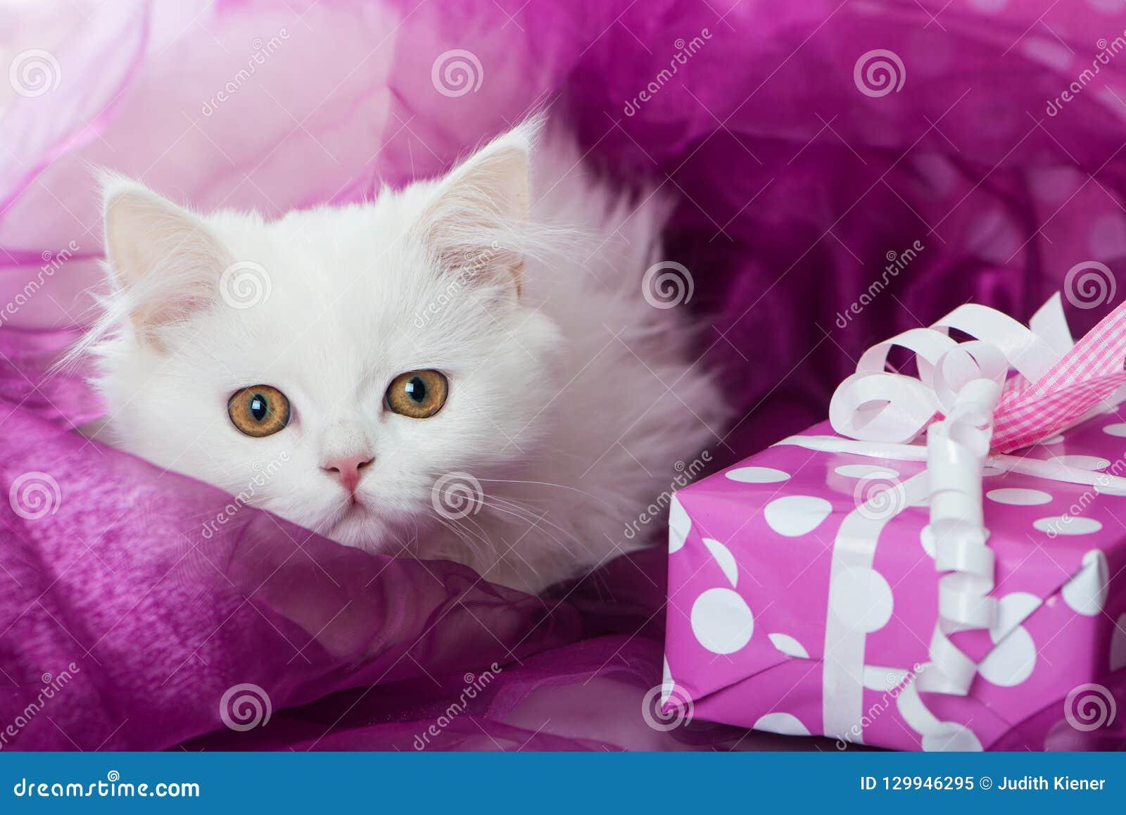 Met Een Bruine Gestripte Kitten Op Een Witte Deken Thuis