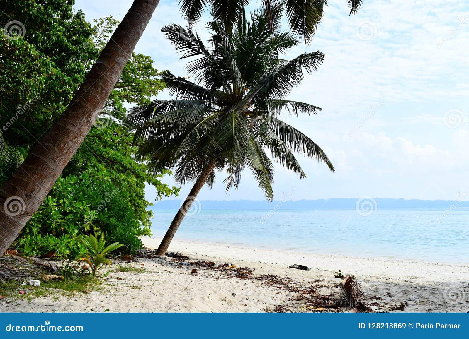 Wit Sandy Beach met Blauw Zeewater met Kokospalmen en Groen - Vijaynagar, Havelock, Andaman Nicobar, India