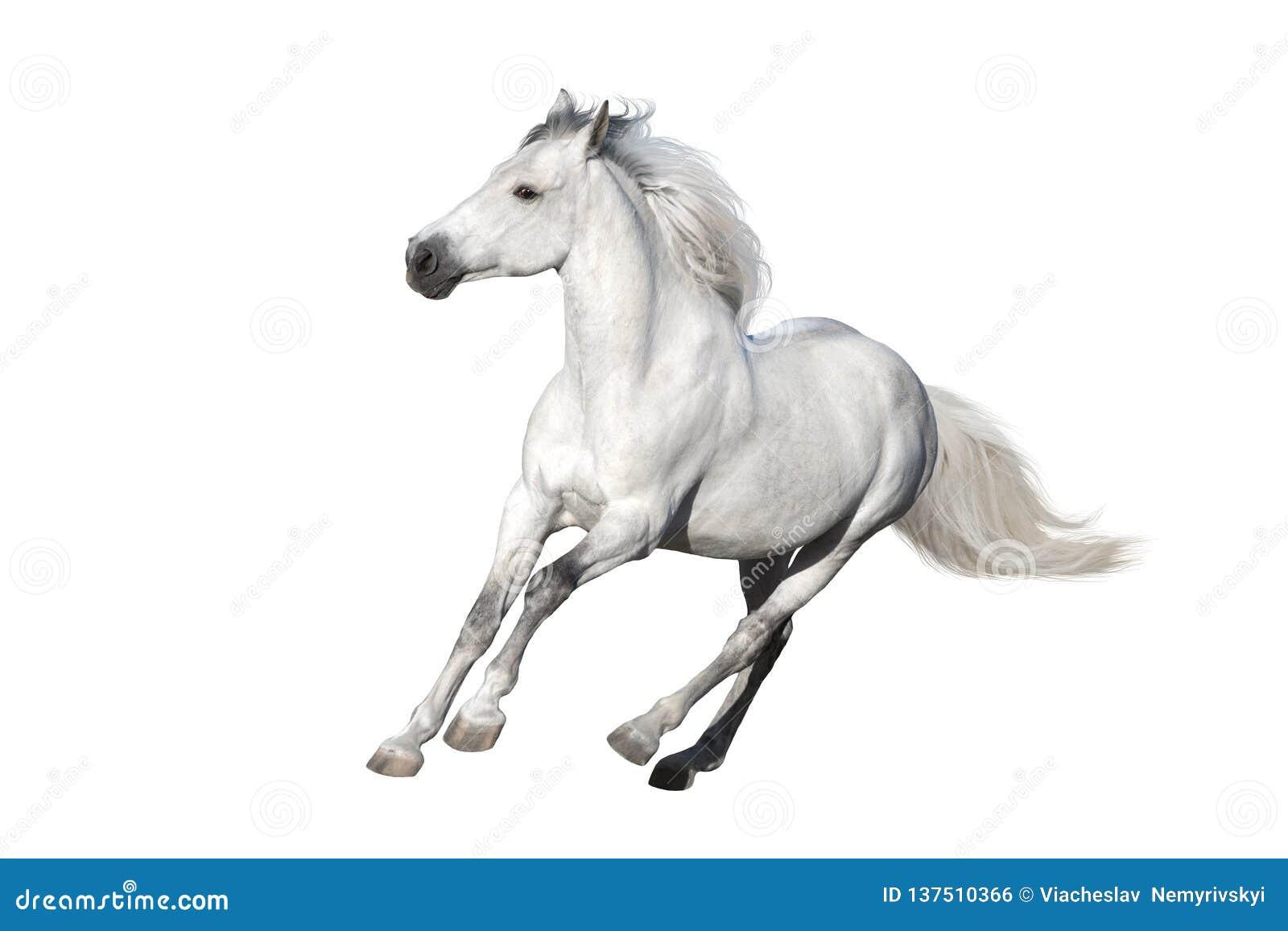Wit verwijderd paard