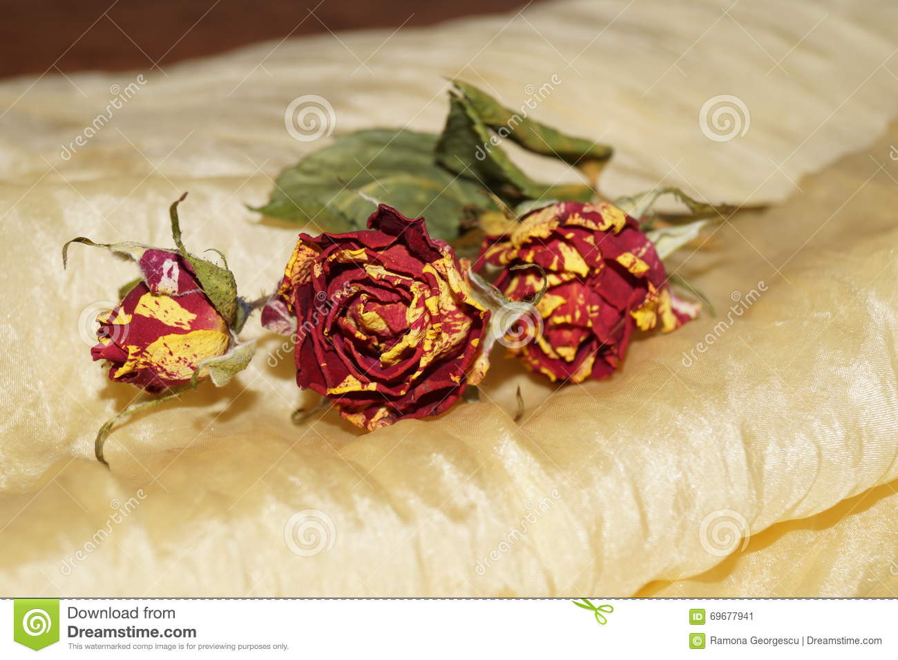 Wither roses on yellow silk stock photo image 69677941 for Natural rose colors