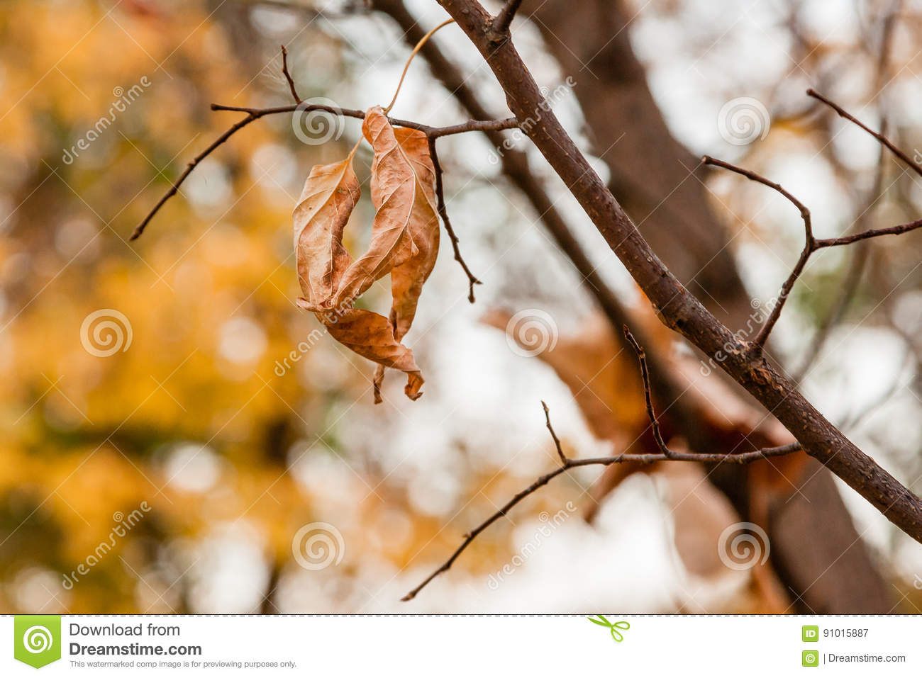 Withered Autumn Leaves On A Tree Branch Stock Image ...