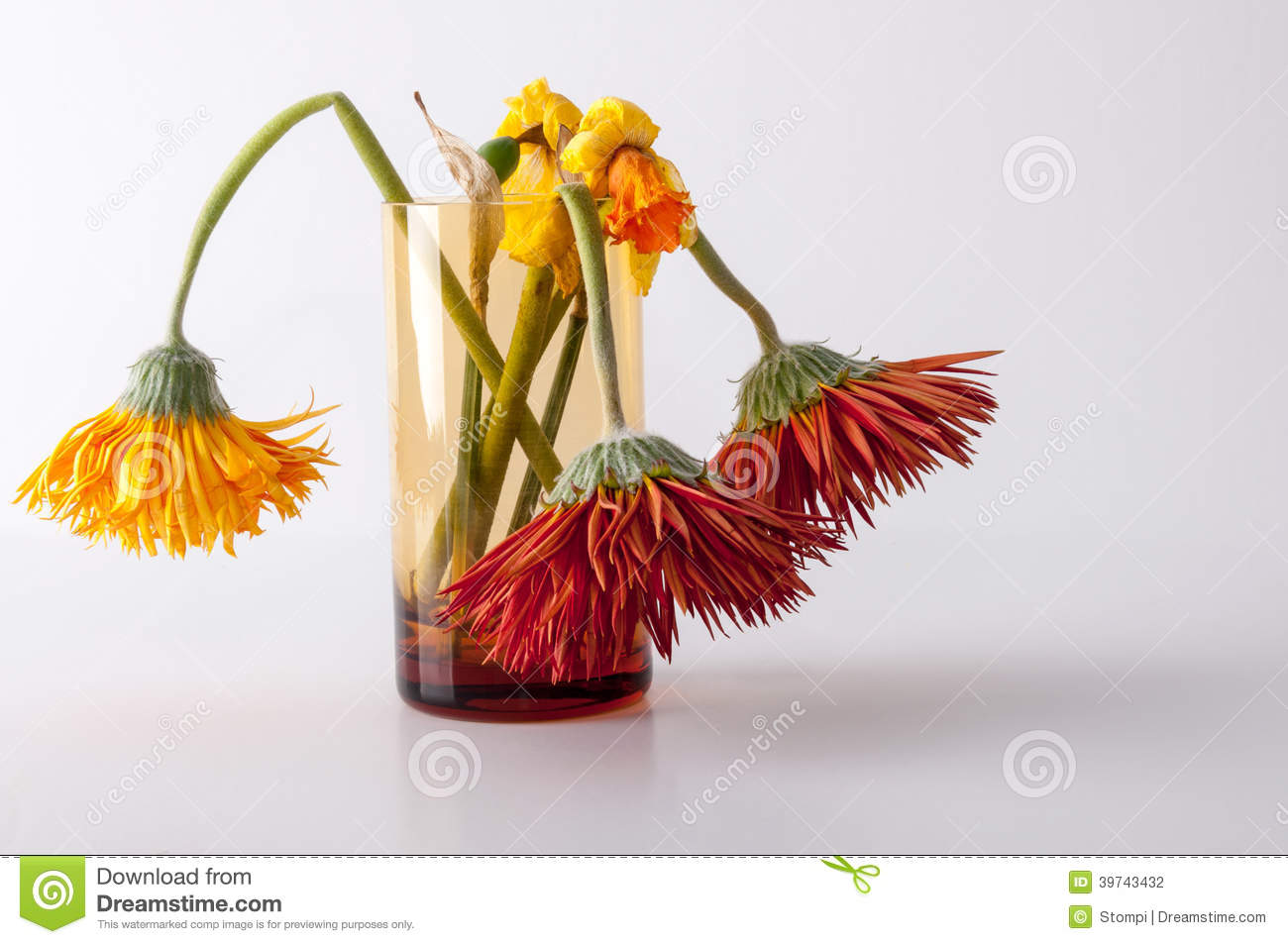 Withered flowers stock photo. Image of glass, flowers - 39743432