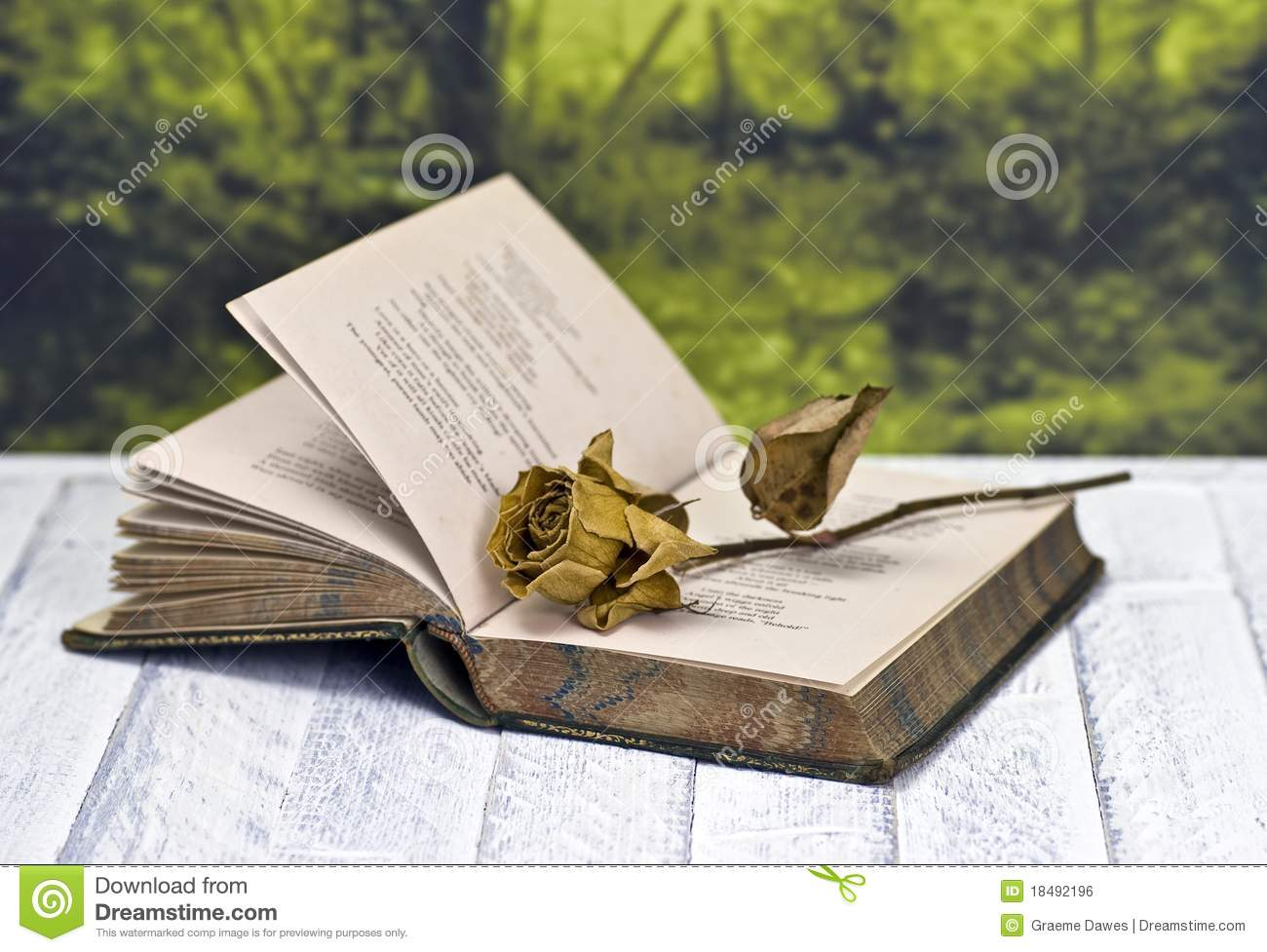 Withered Rose On Book Royalty Free Stock Image