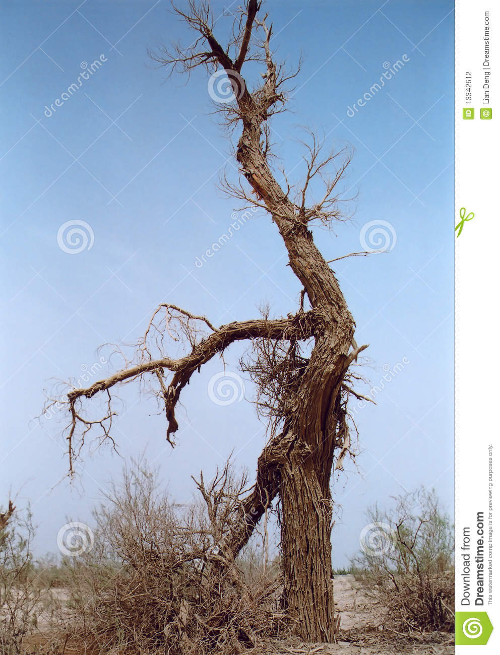 Withered Tree Stock Photography - Image: 13342612