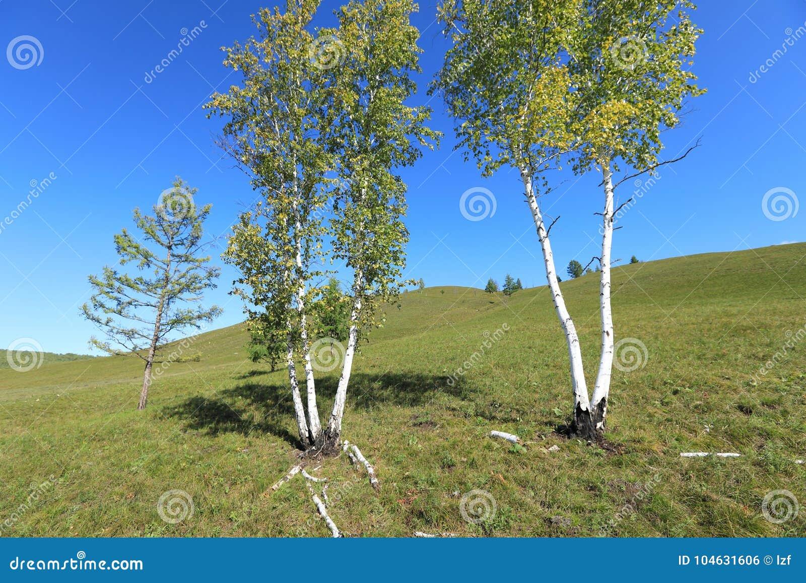 Download Witte Berk stock foto. Afbeelding bestaande uit naughty - 104631606
