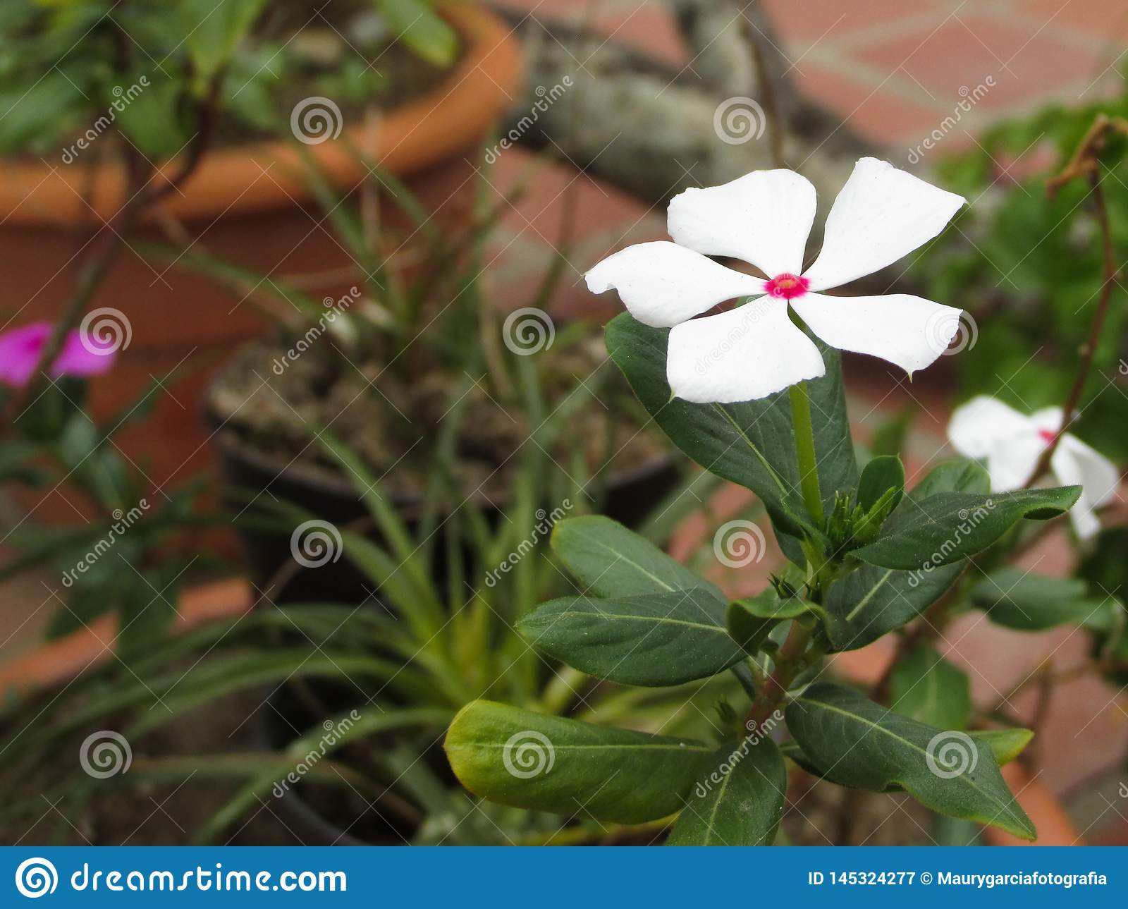 Witte Bloem in Kleine Tuin