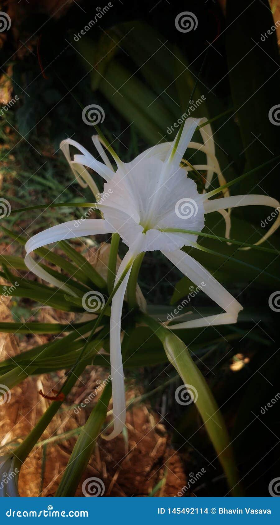 Witte bloem in Mooie tuin