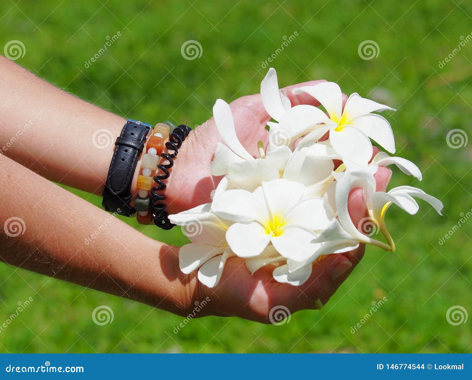 Witte bloemen in handen die een kom vormen