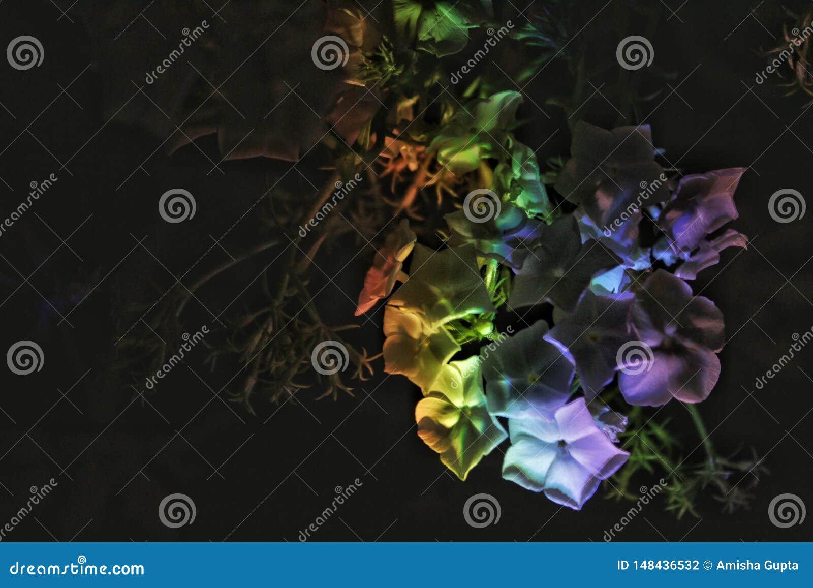 Witte bloemen met regenbooggevolgen