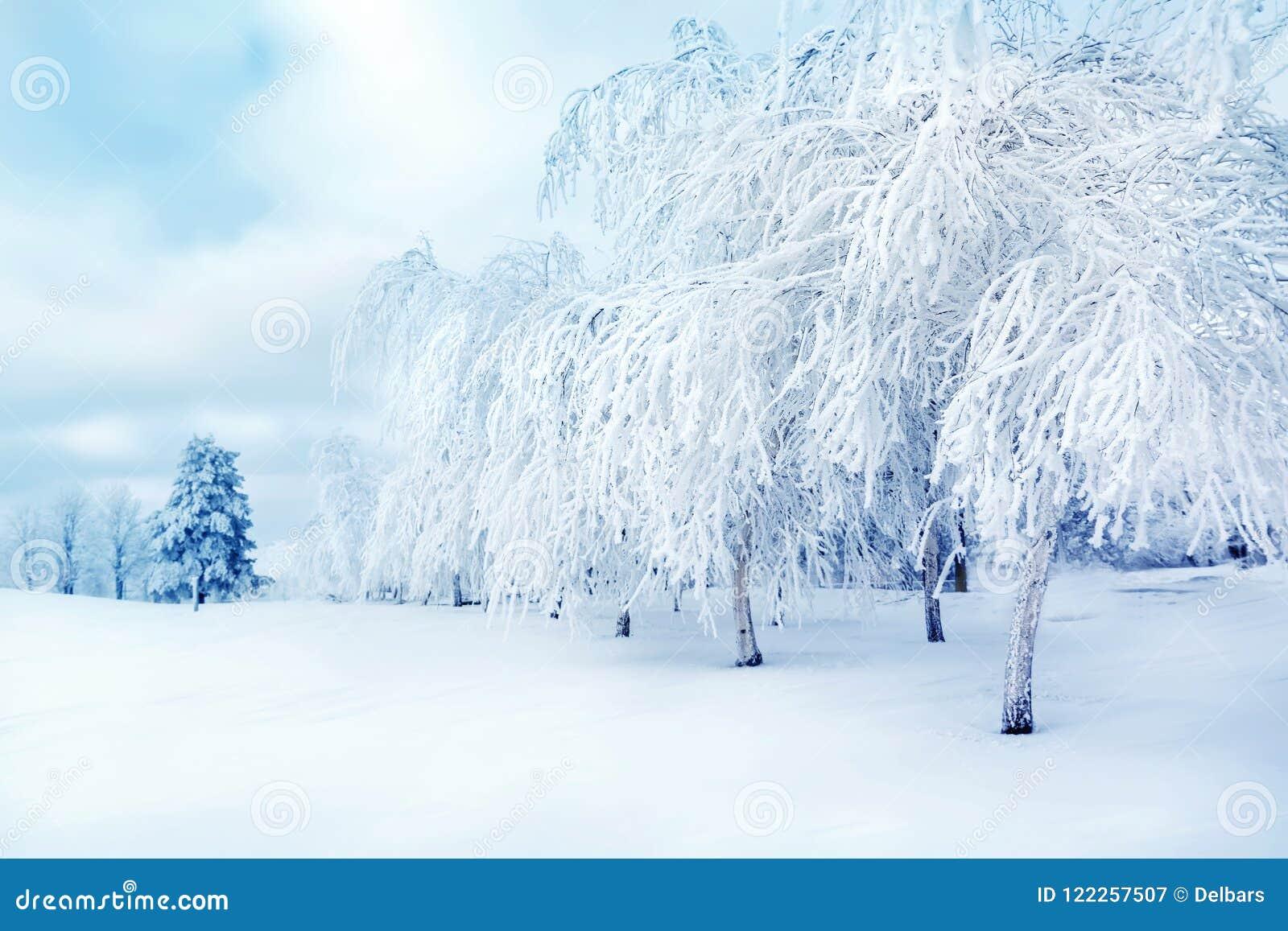 Witte bomen in de sneeuw in het stadspark Mooi de winterlandscape