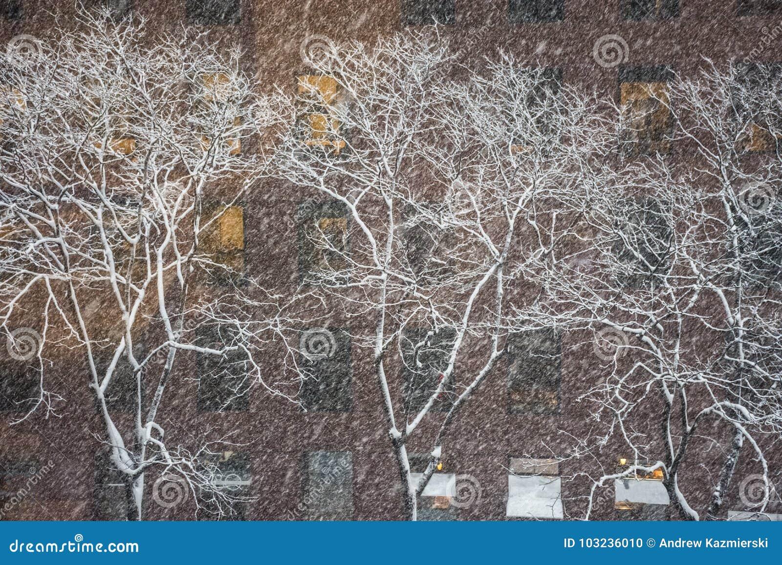 Witte de winterbomen
