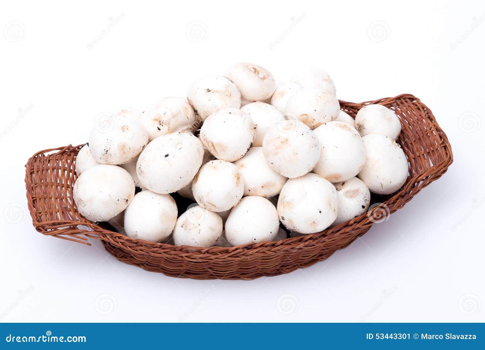 Witte die paddestoelen in een mand op wit wordt geïsoleerd