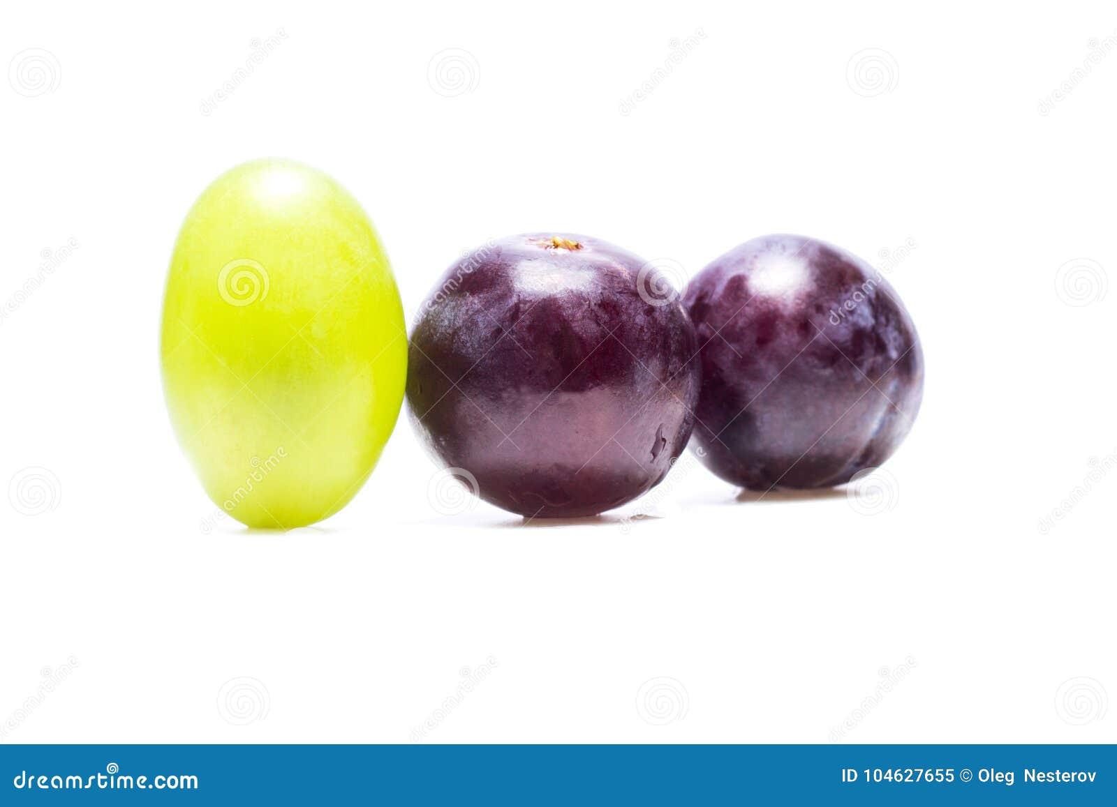Download Witte Druiventribune Uit Onder Het Blauw Stock Afbeelding - Afbeelding bestaande uit verschillend, voedsel: 104627655
