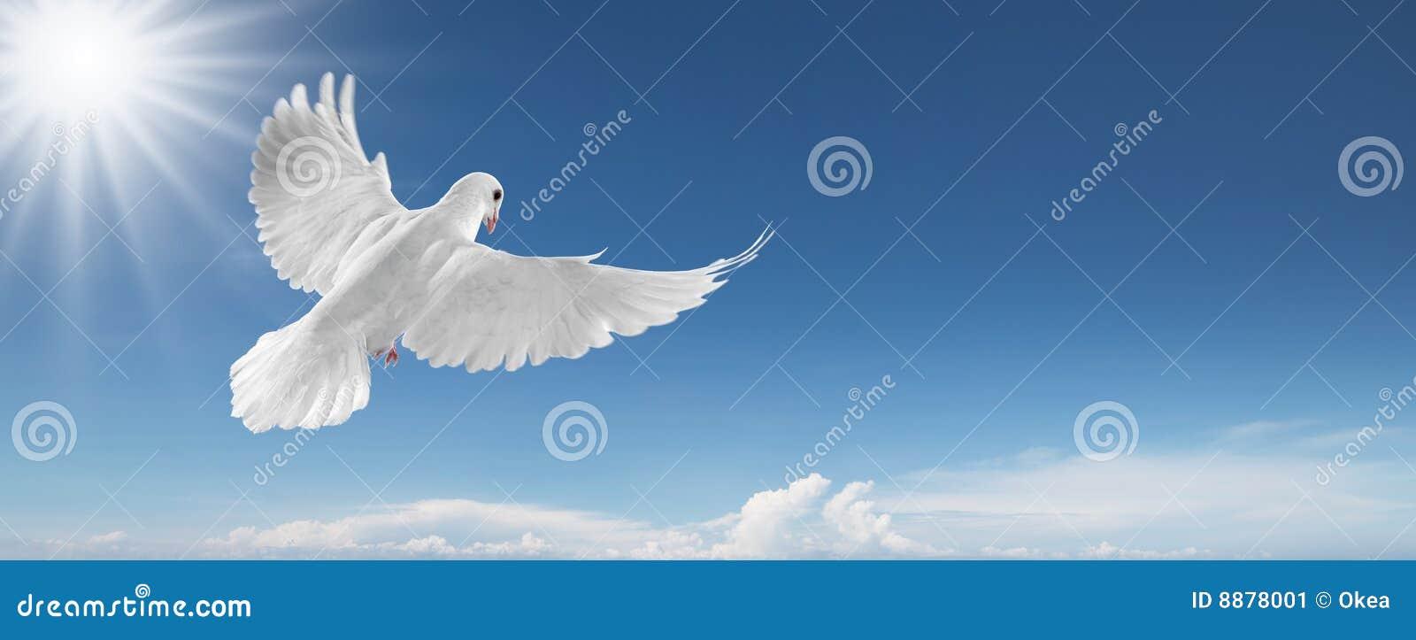 Witte duif in de hemel