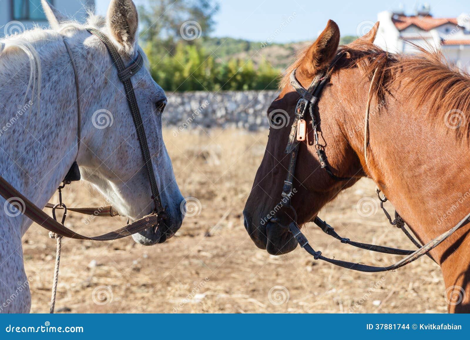 Witte en bruine paarden op het landbouwbedrijf