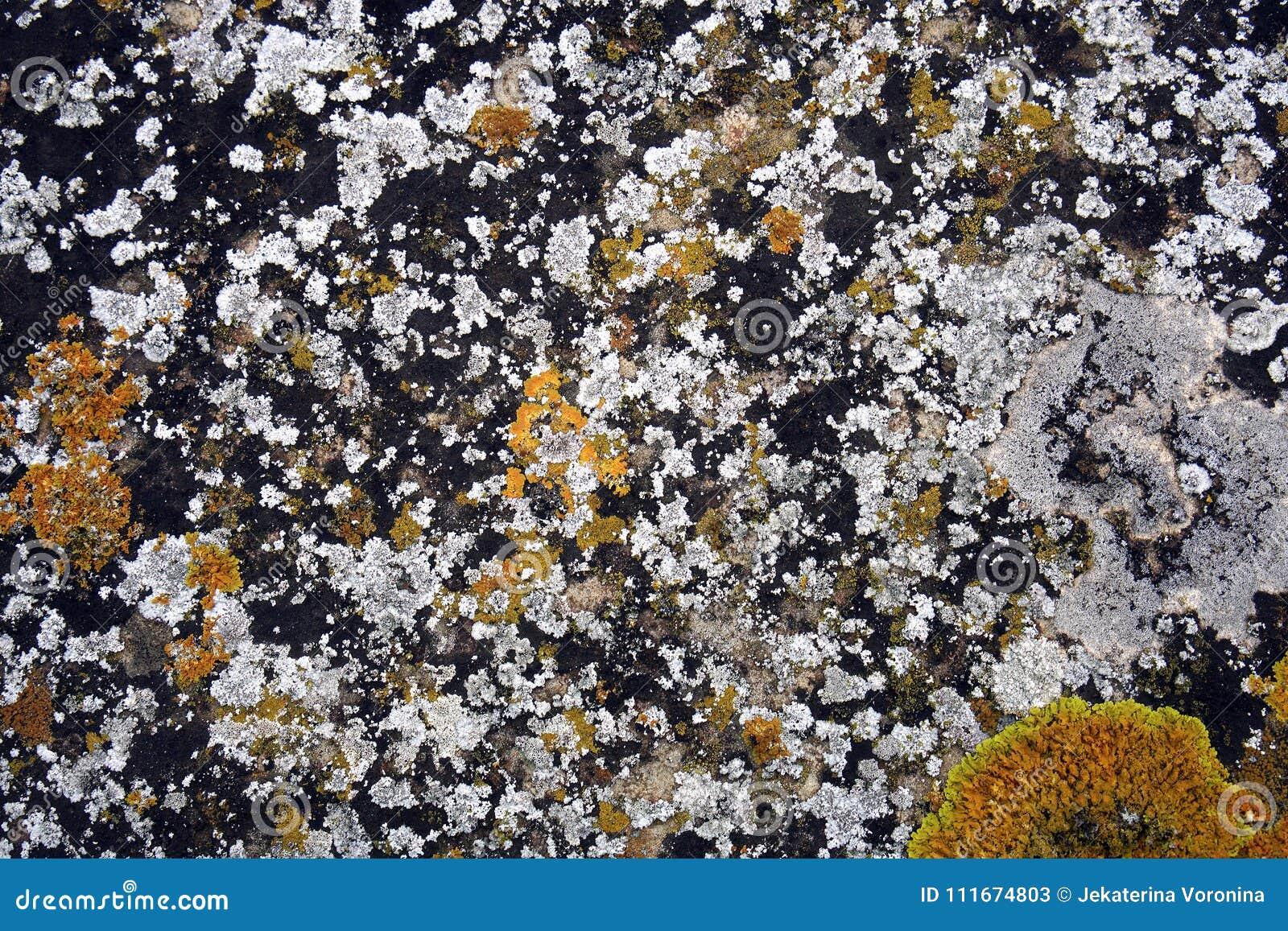 Witte en gele korstmossen op steen
