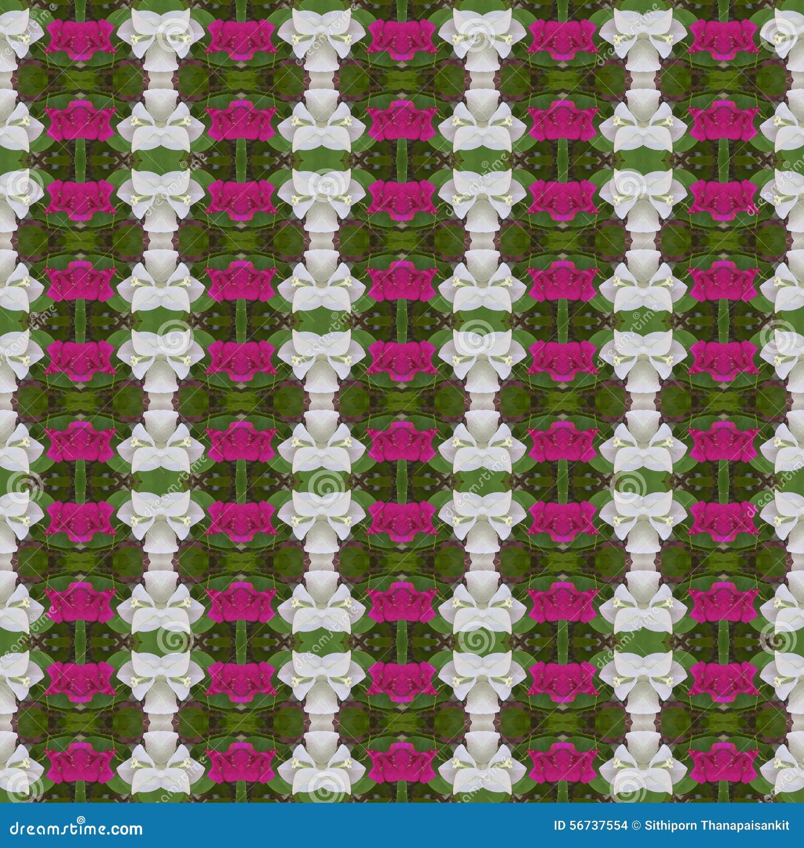 Witte en roze Bougainvillea of Document naadloze bloem abstracte achtergrond