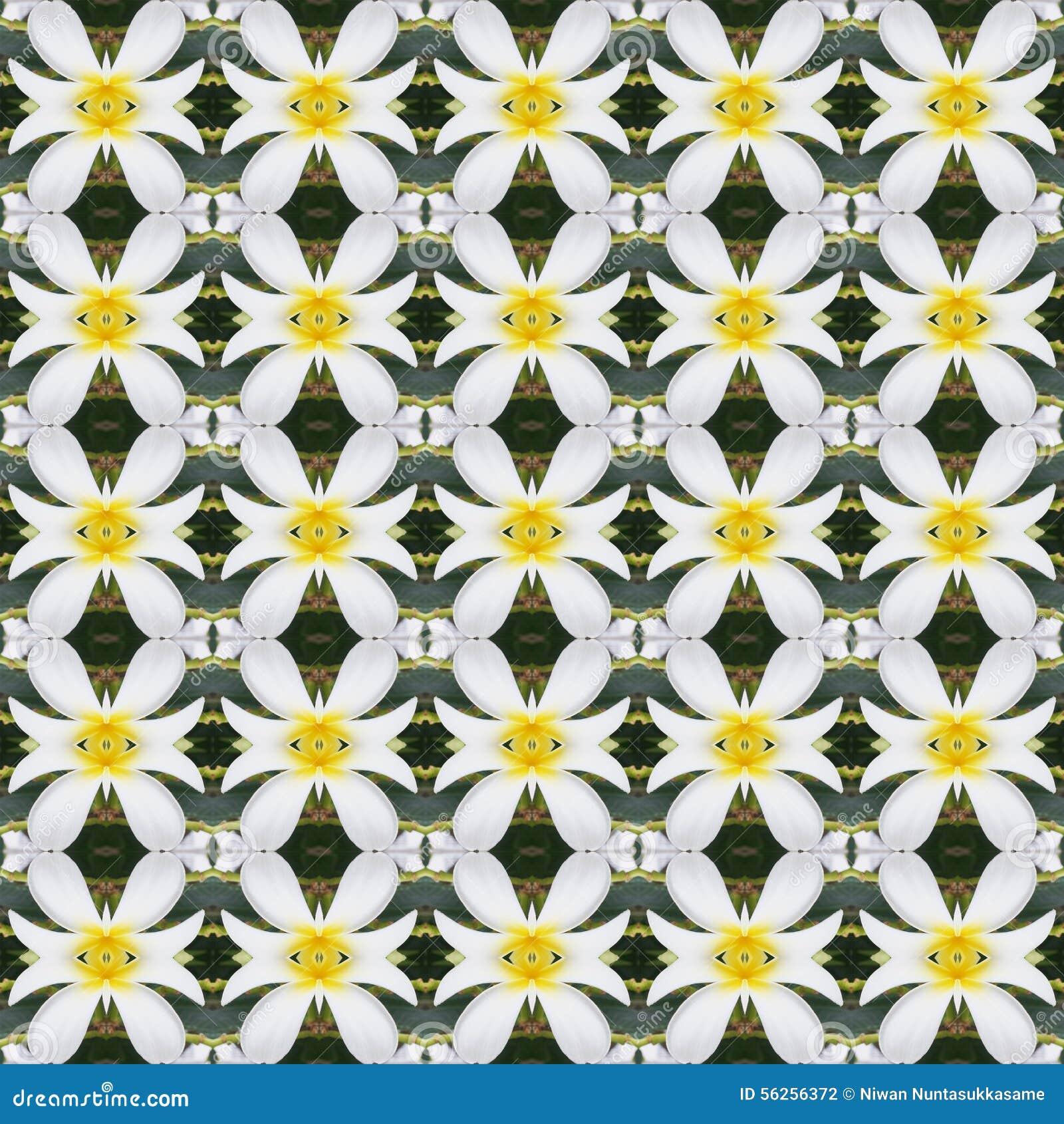 Witte Frangipani-bloemen, een boeket van naadloze bloemen