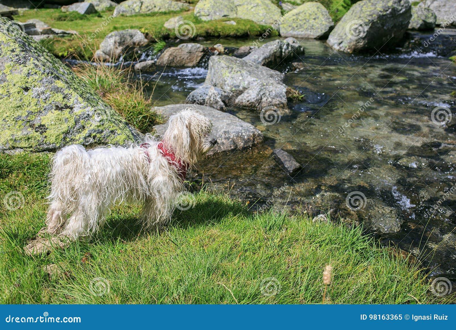 Witte hondtribune in een weide dichtbij het meer