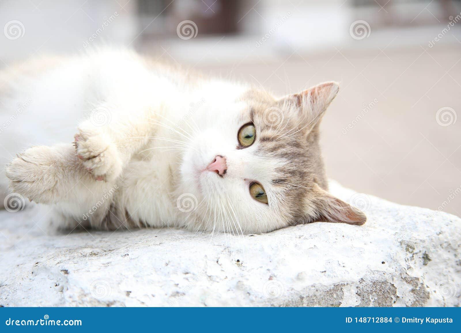 Witte kat die op helder aangestoken beton leggen