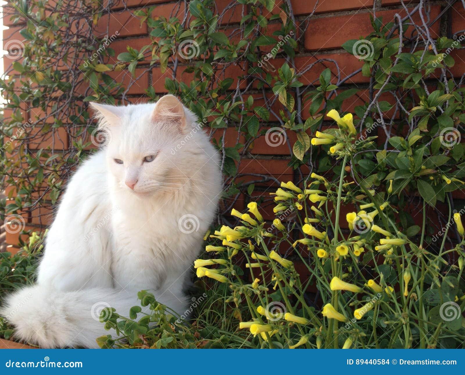 Witte kat en gele bloemen