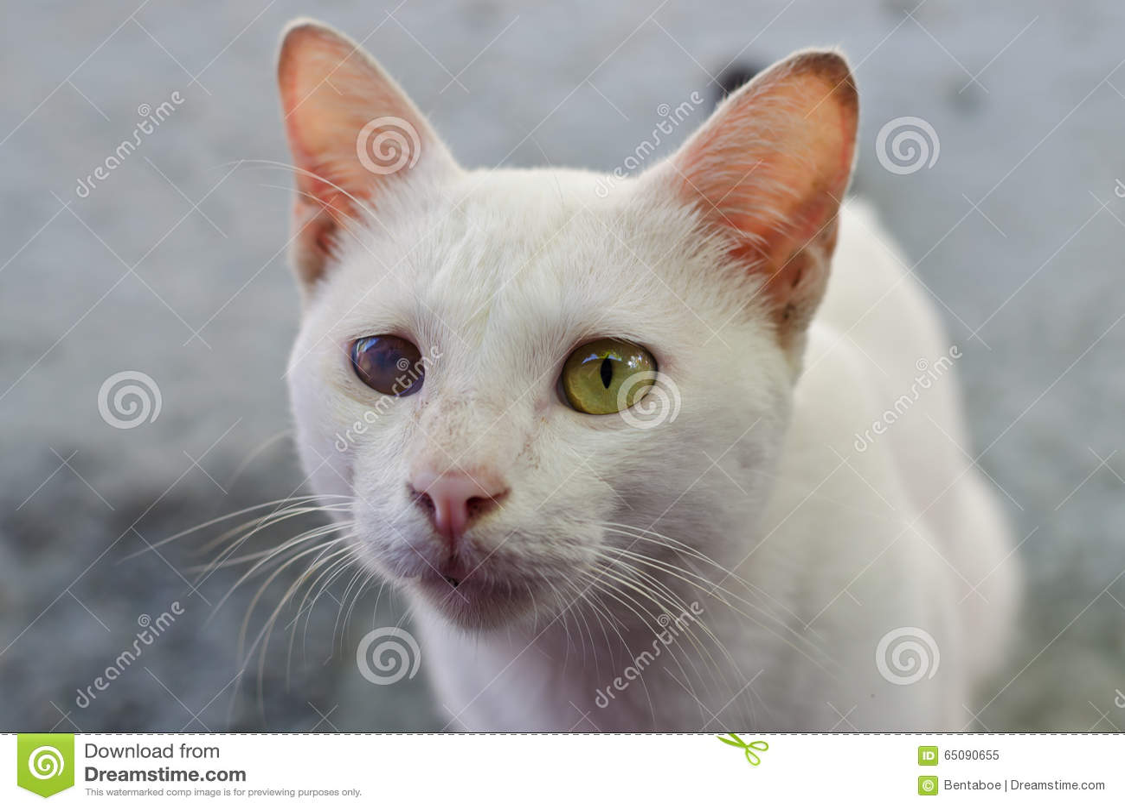 Witte kat met één blind oog