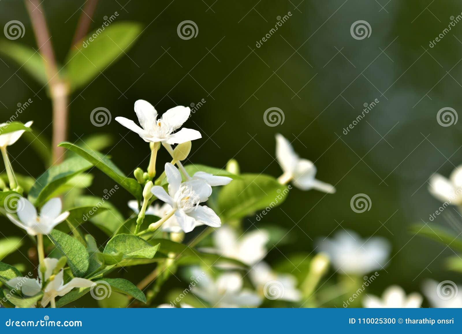Witte kleine bloem en boom