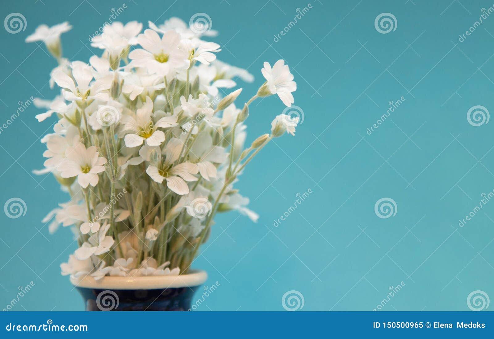 Witte kleine bloemen in een vaas Een boeket van bloemenyaskolki in een ceramische vaasclose-up Bloemen in een blauwe vaas met een