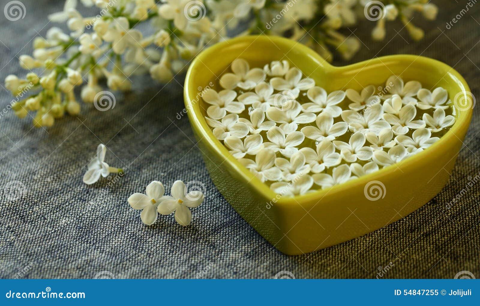 Witte Lilac Bloemen
