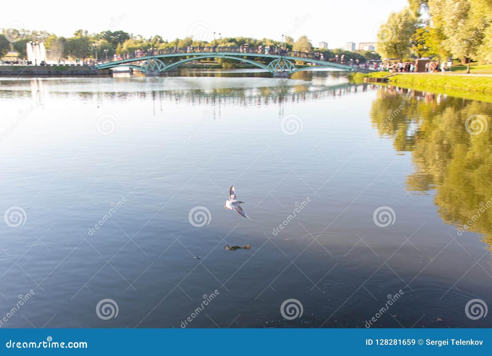 Witte meeuwvliegen over het water Grote vijver met een brug, mensengang langs de brug Fontein op het eiland