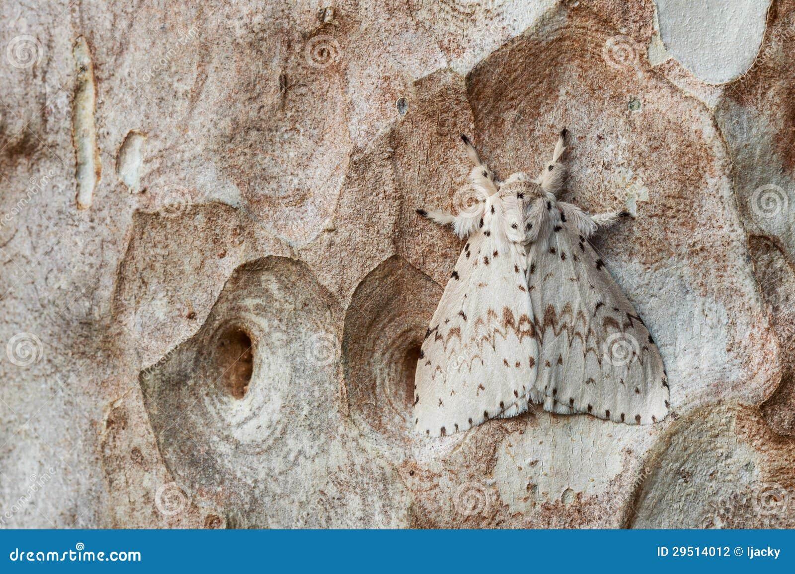 Witte mot op boomschors
