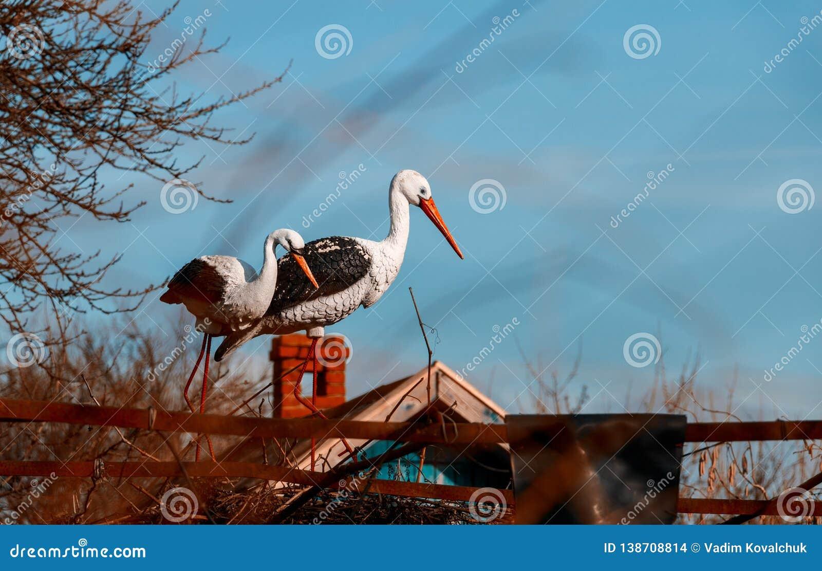 Witte ooievaar in het nest