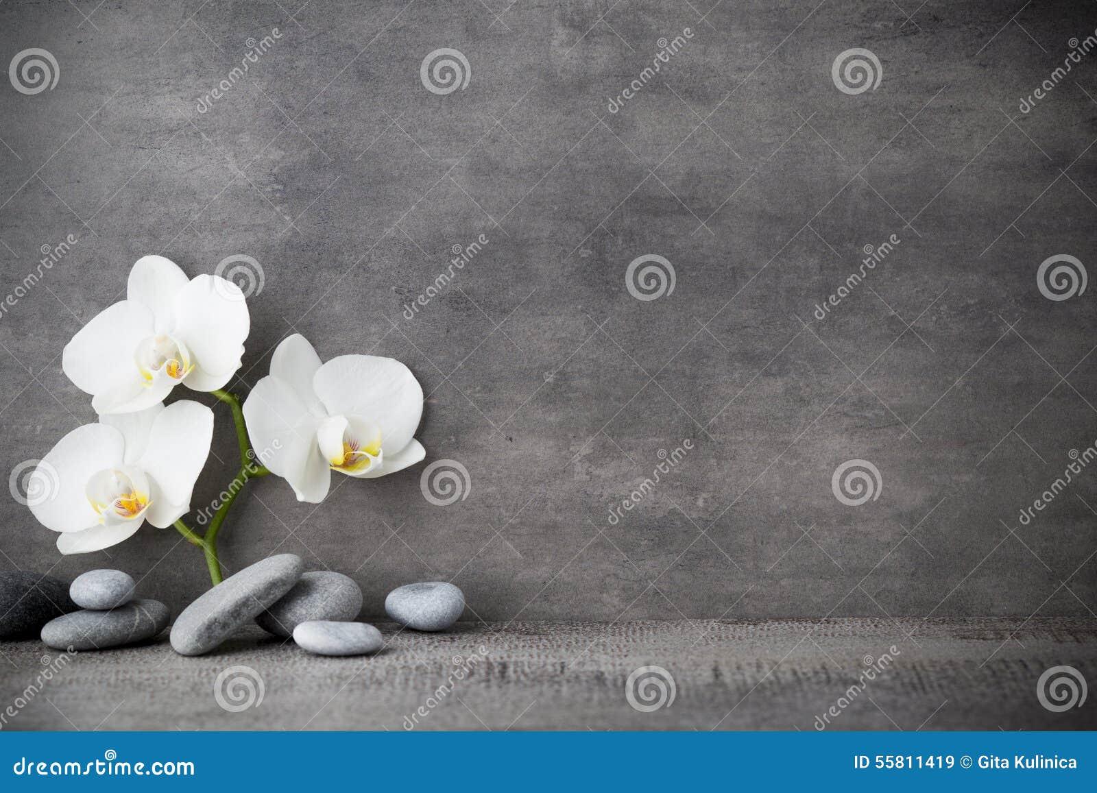 Witte orchidee en kuuroordstenen op de grijze achtergrond