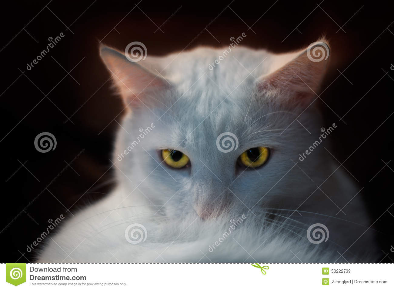 Witte pussy pic