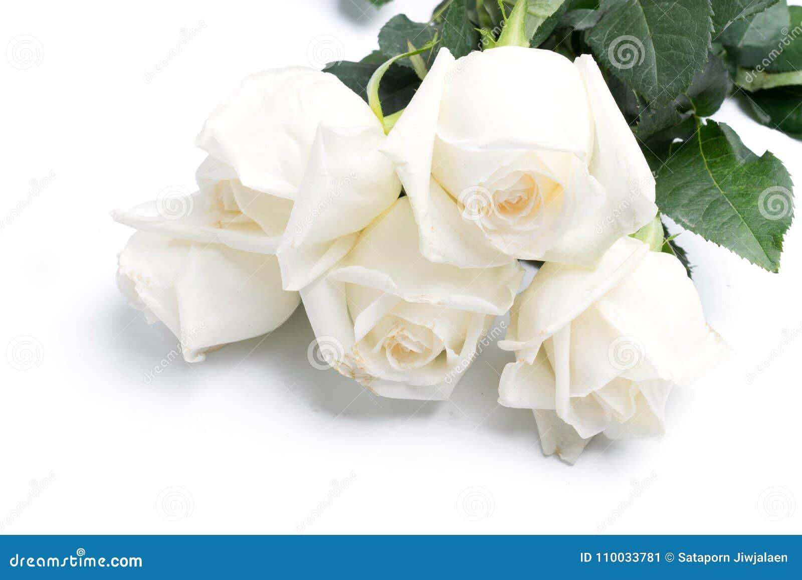 Witte rozen op een wit
