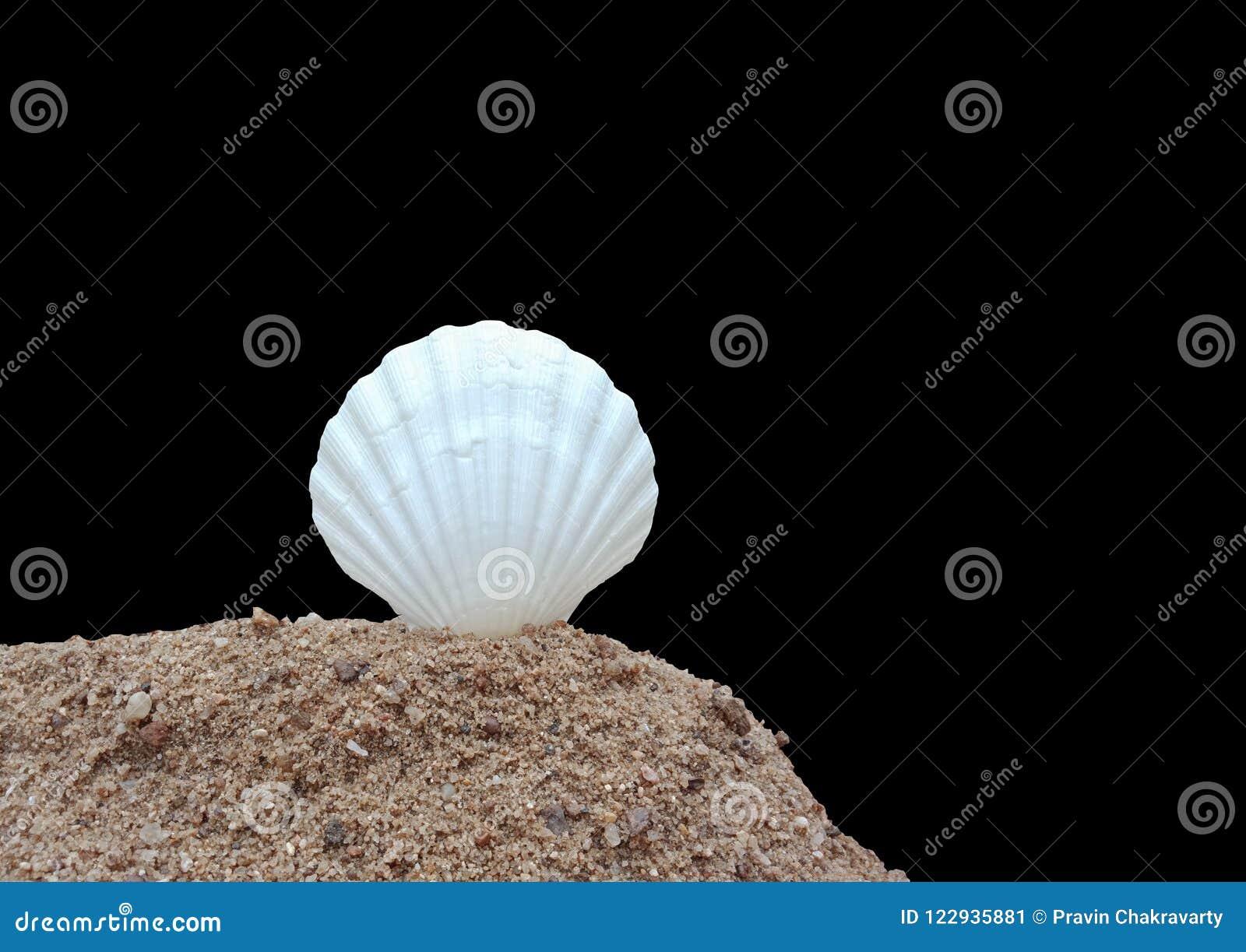 Witte shell op het zand met zwarte achtergrond, geweven behang als achtergrond