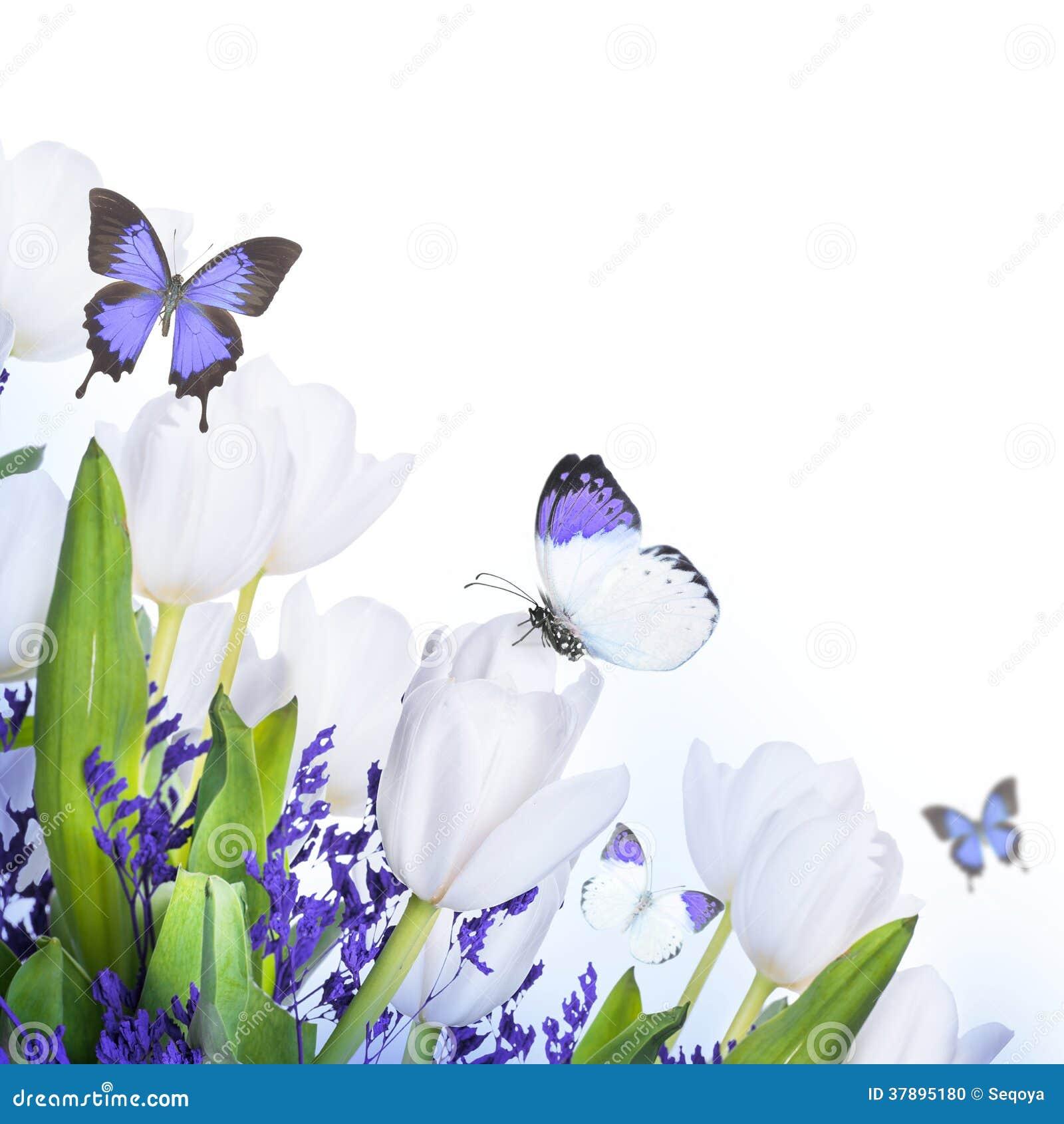Witte tulpen met blauw gras