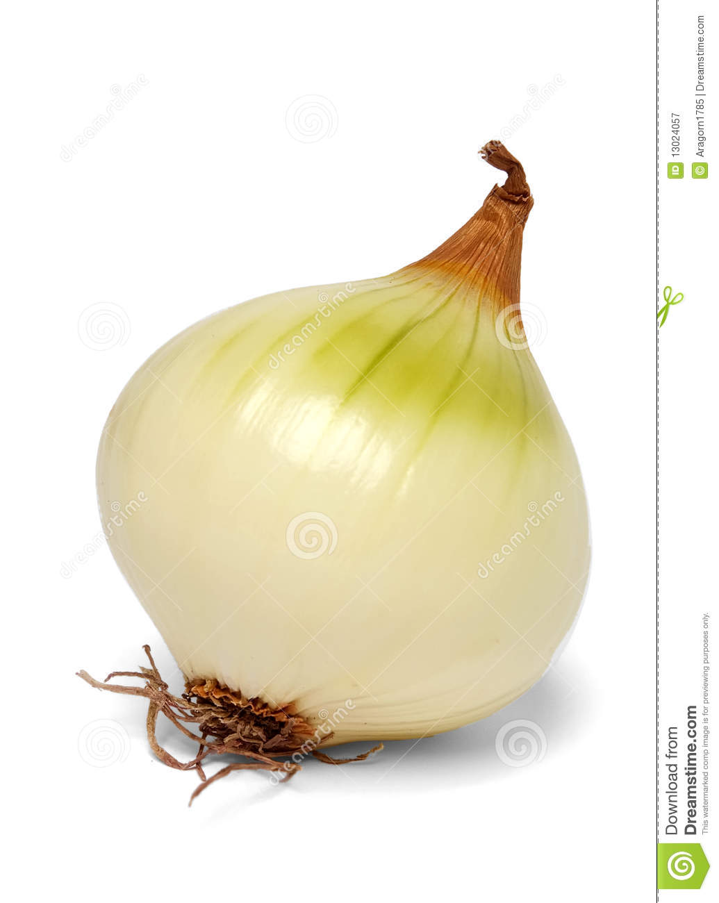 singles in cebolla 1 spanish word for onion 2 term used to describe a chick with a hot body but an ugly face she looks like an onion after you take her skirt and tie it up over her head, thus allowing you to have your way with her and not get turned off.