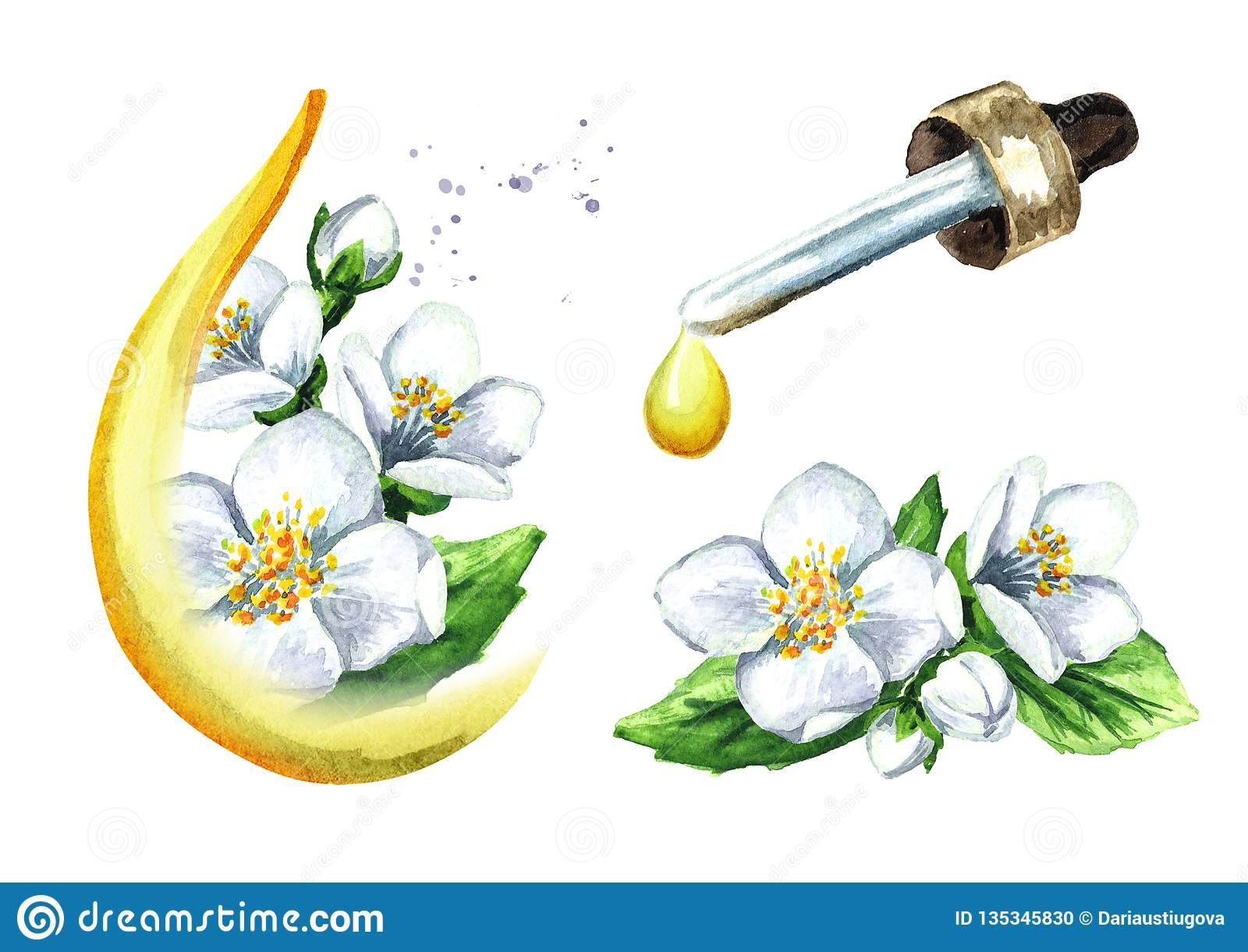 Witte van de jasmijnbloem en etherische olie reeks, Kuuroord en aromatherapy waterverfhand getrokken die illustratie, op wit word
