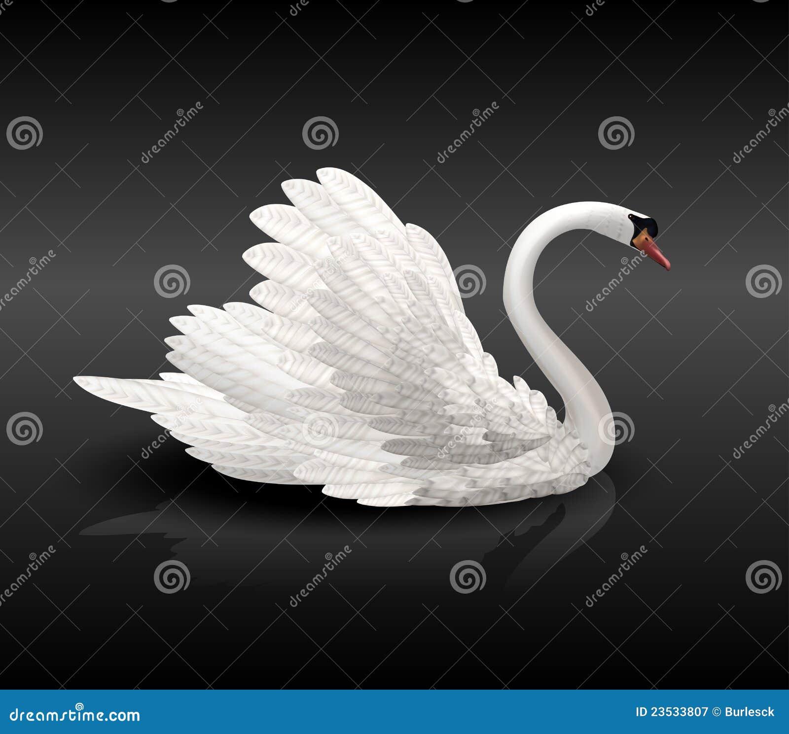 Witte zwaan op zwart water