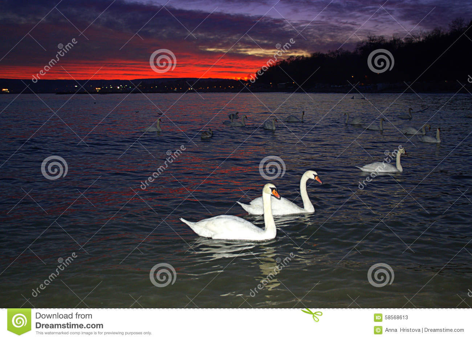 Witte zwanen in evenigoverzees