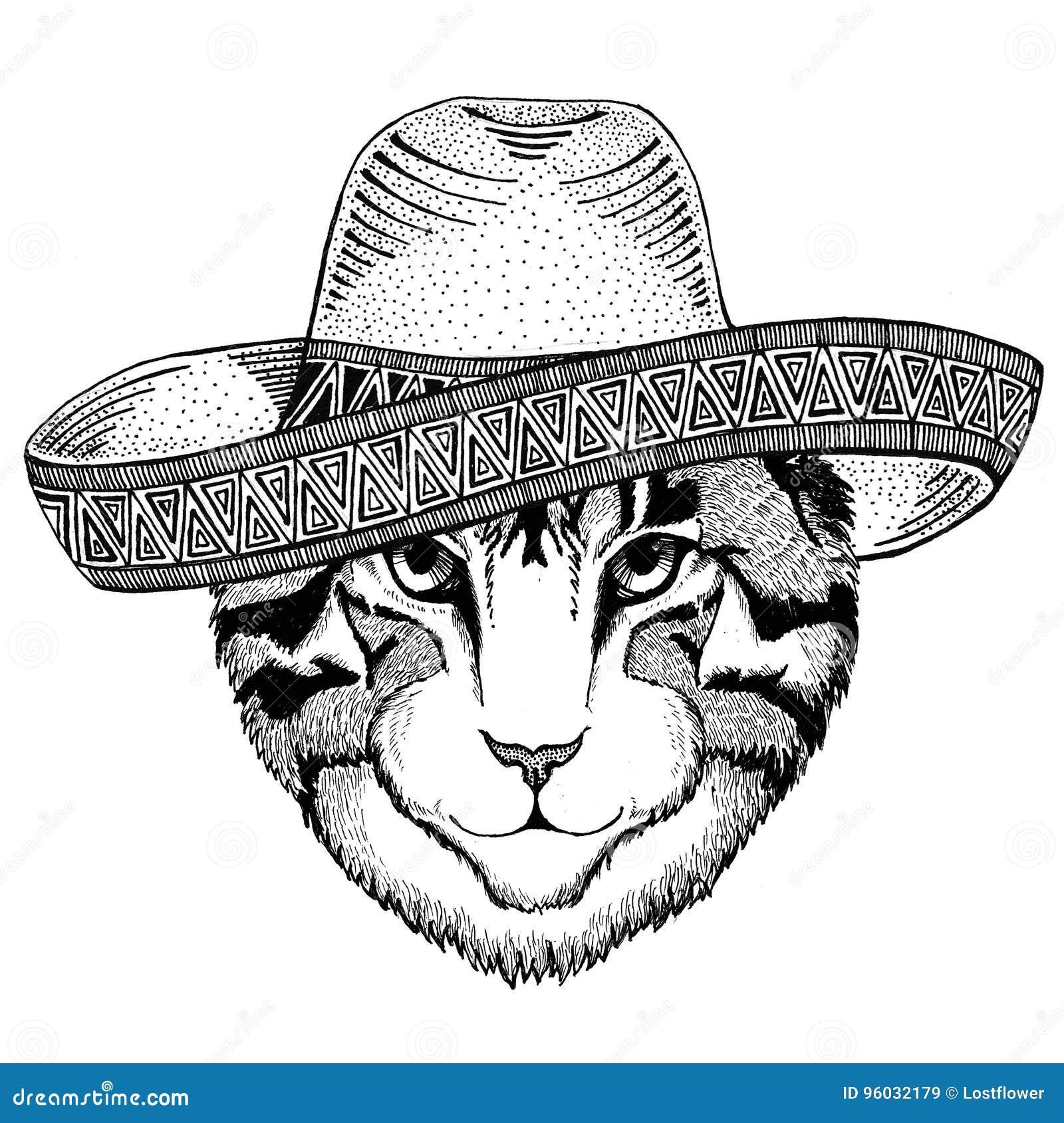 Wizerunek domowego kota dzikie zwierzę jest ubranym sombrero Meksyk fiesta meksykanina przyjęcia ilustracyjnego Dzikiego zachód