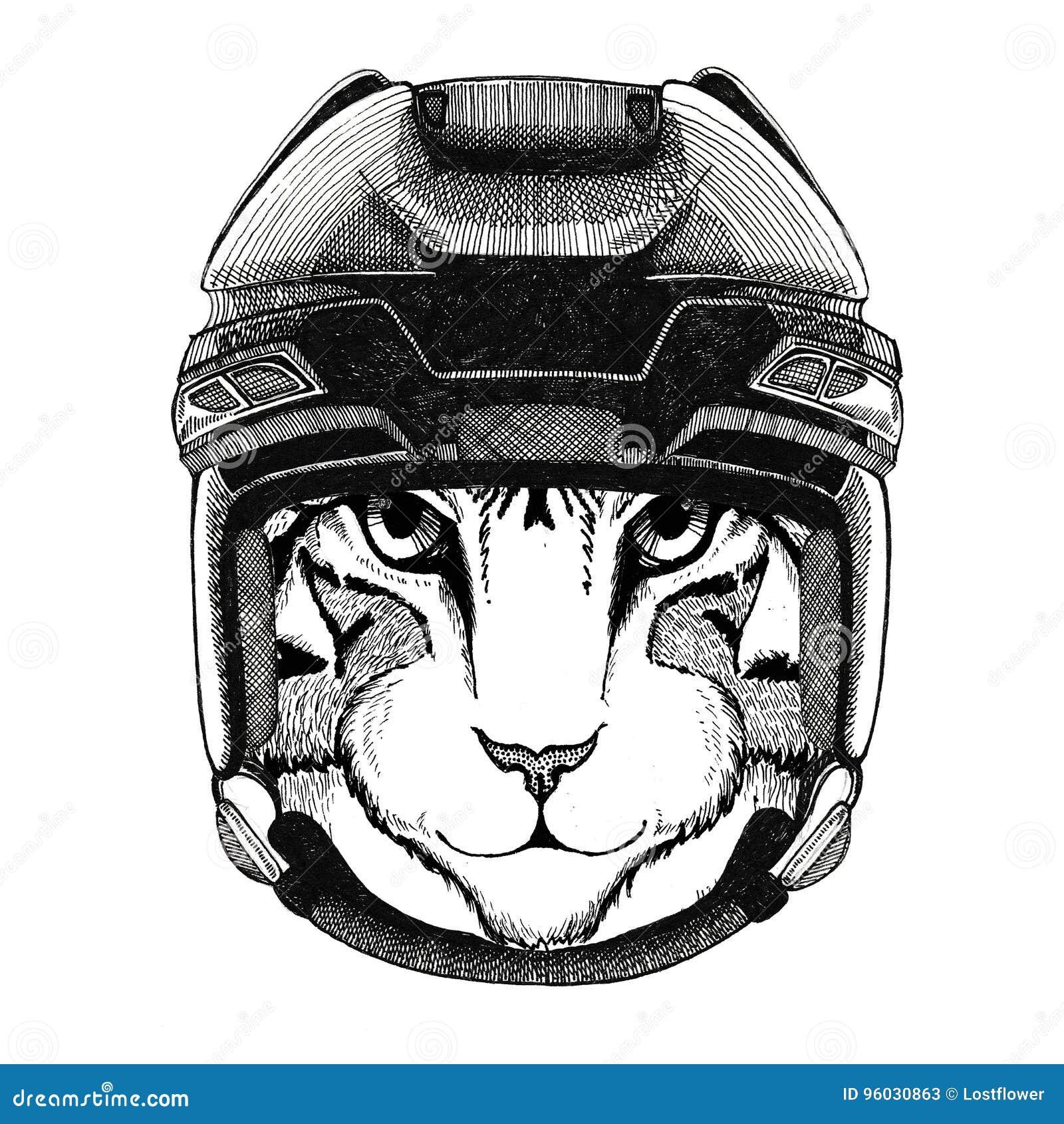 Wizerunek domowego kota wizerunku Hokejowy dzikie zwierzę jest ubranym hokejowego hełma sporta zimy sporta zwierzęcego Hokejowego