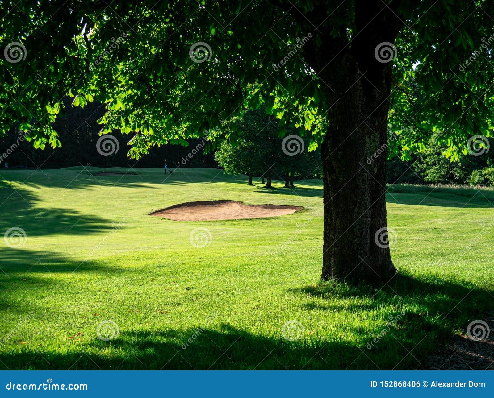 Wizerunek pole golfowe z bunkierem i drzewami